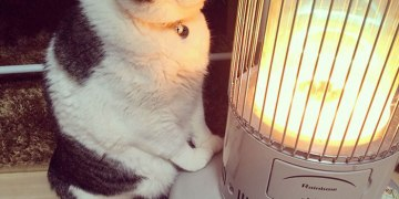 Cat-Falling-In-Love-With-A-Heater-During-Cold-Weather-9Mood