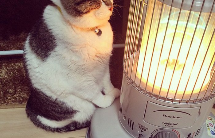This Cat Falling In Love With A Heater During Cold Weather