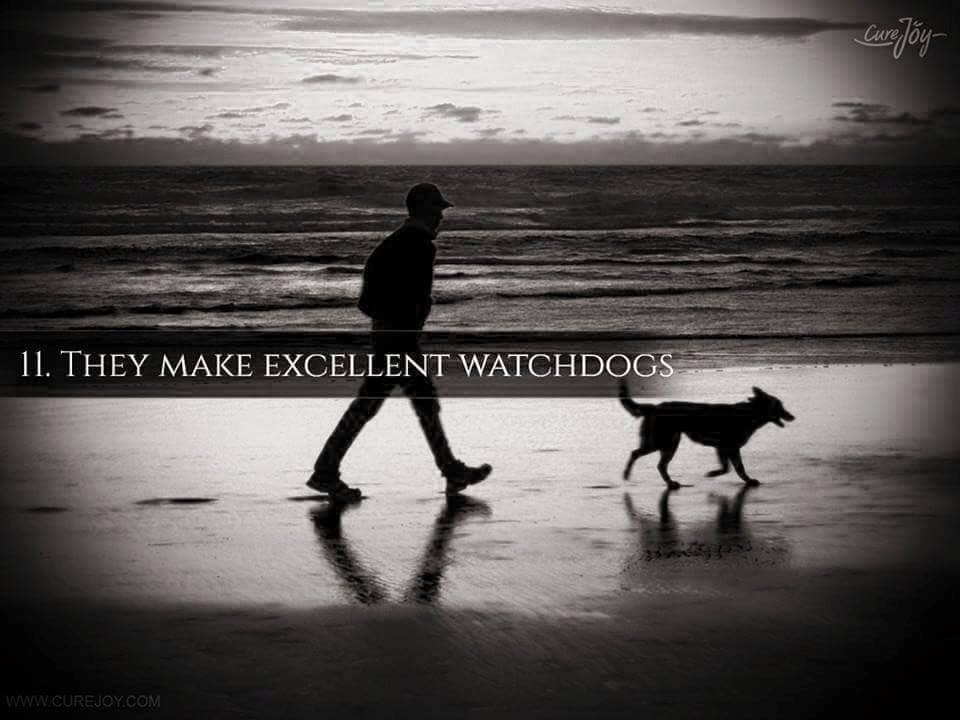 Reason-11-They-Make-Excellent-WatchDogs-via-9Mood