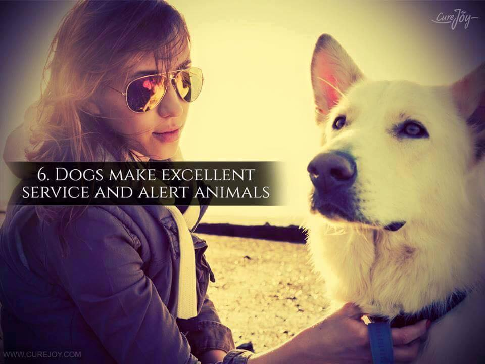 Reason-6-Dogs-Make-Excellent-Service-And-Alert-Animals-via-9Mood