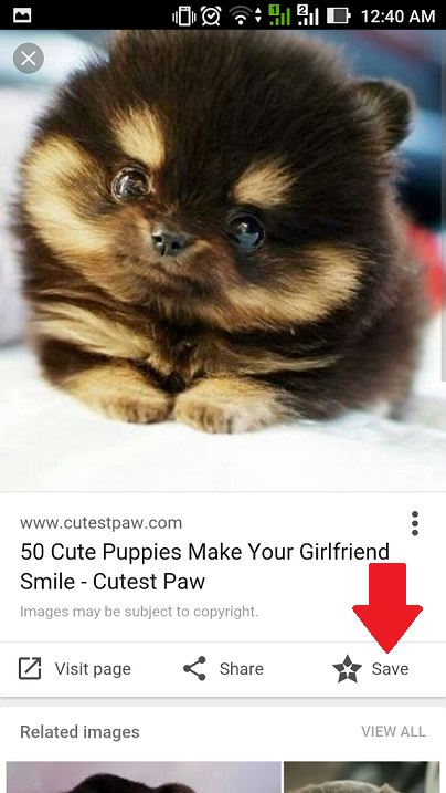 google-image-search-puppy
