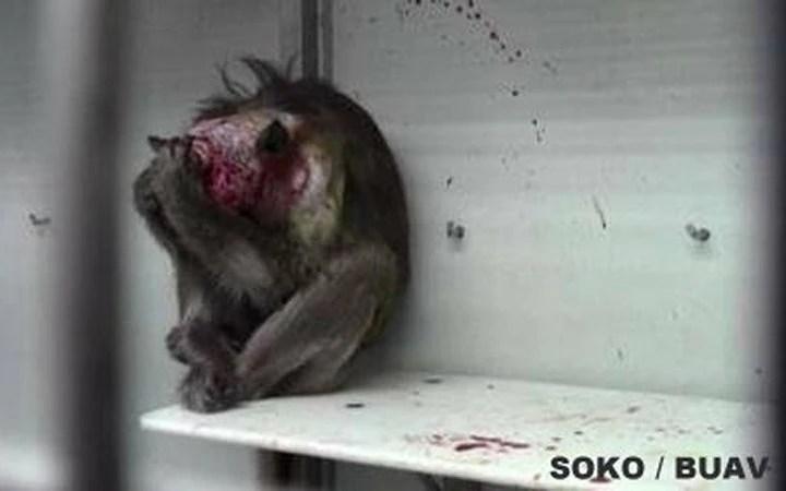 Blog Elke Wirtz MUnhJFOqubNLlBY-800x450-noPad Fragen über den wissenschaftlichen Wert der Affenhirnforschung am Max Planck Institut Petitionen Tierschutz  Fragen über den wissenschaftlichen Wert der Affenhirnforschung am Max Planck Institut