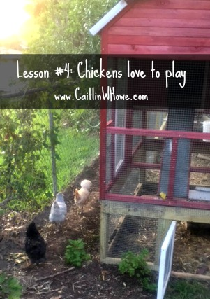 healthy living lesson backyard chickens 4
