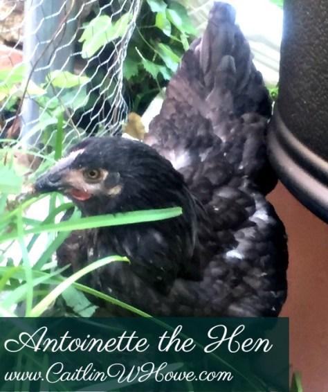 ChickenNames_Antoinette