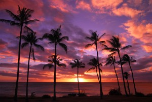 palmtree-sunset_shutterstock_reduced
