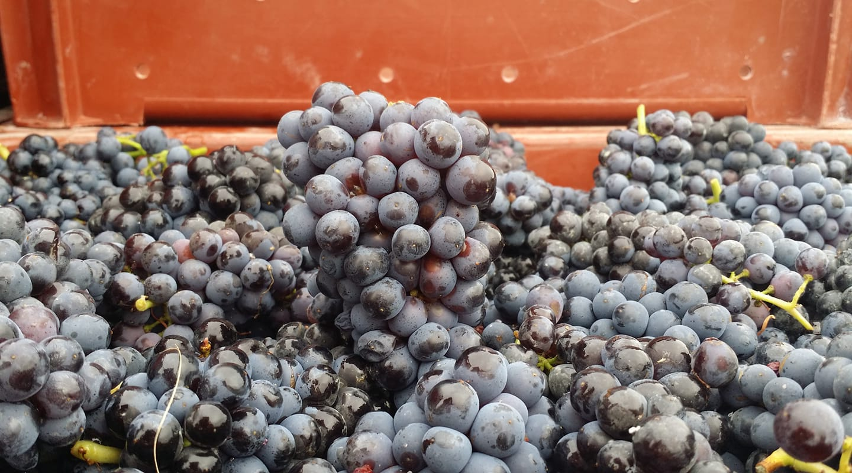 Red wines range