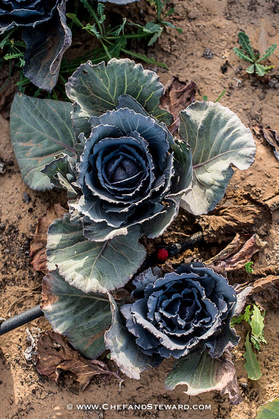 greenheart-organic-farms-dubai-uae-farm-tour-25.jpg
