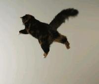 Kat in het nauw maakt rare sprongen