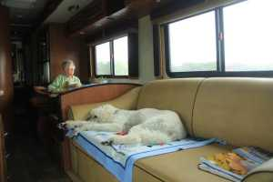 airstream with ringo