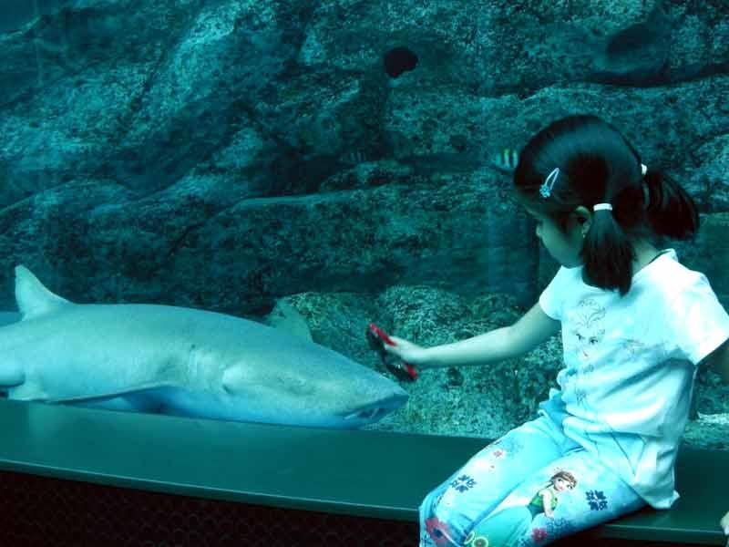 S.E.A. Aquarium - Sentosa Island - Singapore - www.laidbacktraveller.com