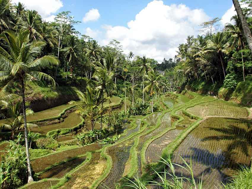 Things to do in Bali tegalalang rice terraces bali indonesia laid back traveller laidbacktraveller.com