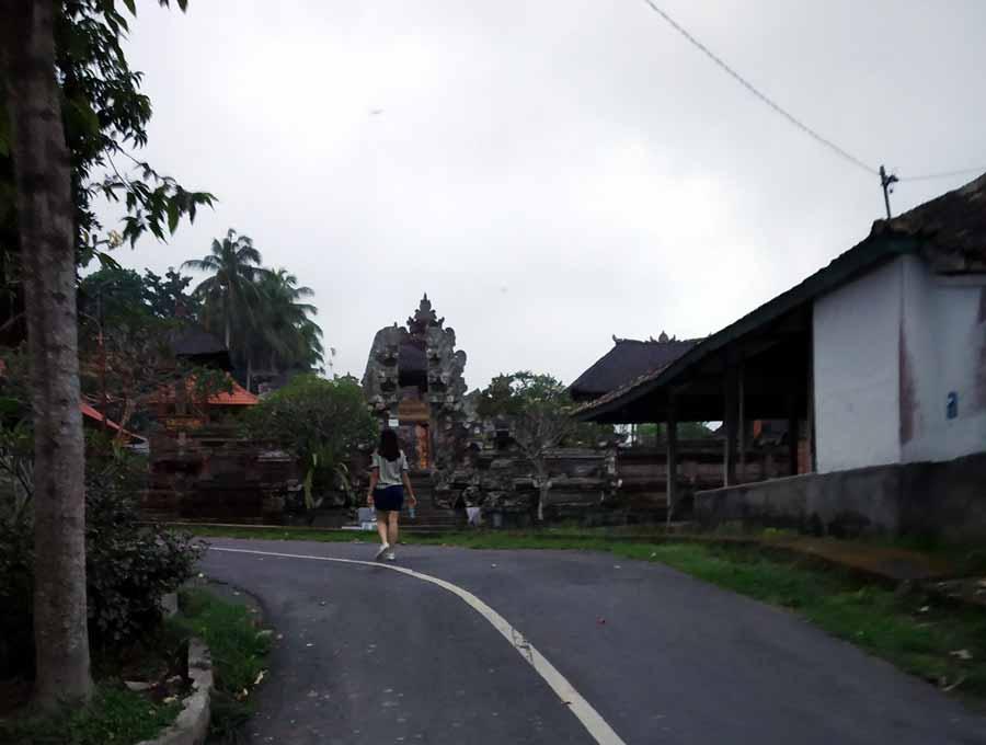 White Heron or the Kokokan Petulu - Bali's Heron Village Laidbacktraveller.com Laid Back Traveller