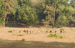 samba kanha national park tiger wild life safari laid back traveller