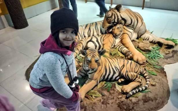 Museum Kanha National Park Tiger reserve