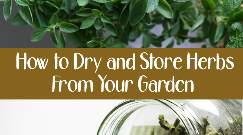 How to Dry and Store Herbs From Your Garden