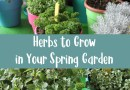 Herbs to Grow in Your Spring Garden