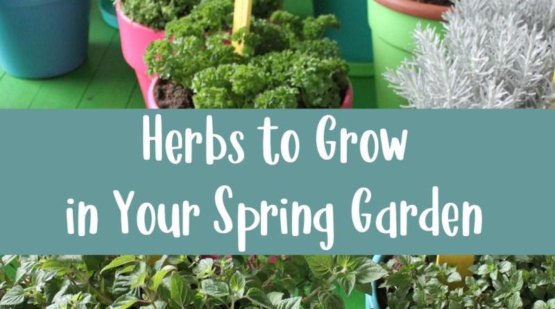 Herbs to Grow in Your Spring Garden