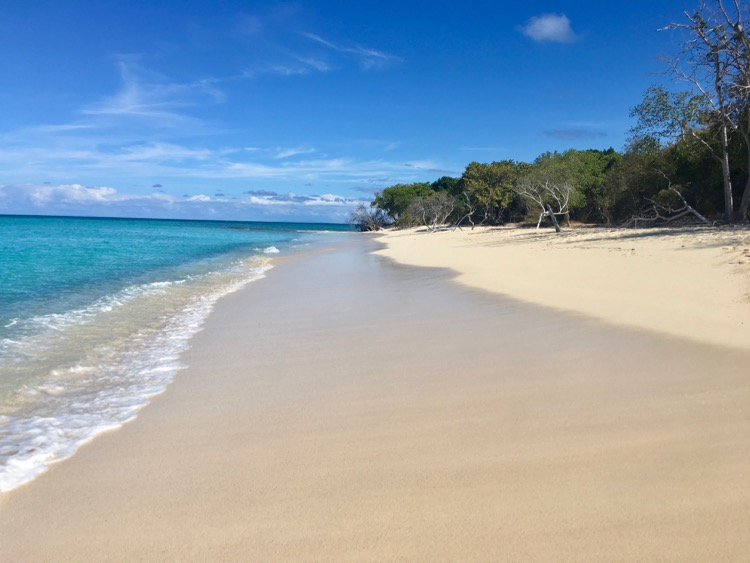 things to do in St. Croix: Buck Island Reef National Monument.