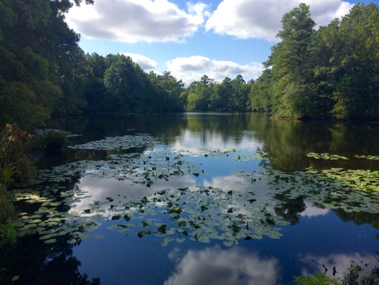 kayaking in Trap Pond State Park, Delaware
