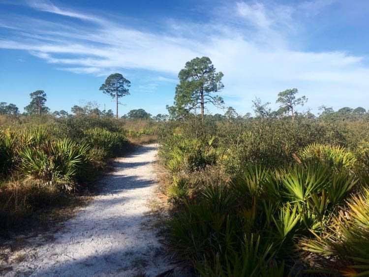 Florida scrub habitat at Oscar Scherer State Park