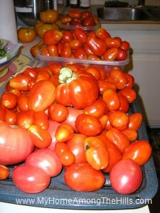 Piles of tomatoes!