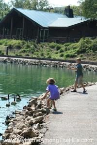 Kids feeding geese