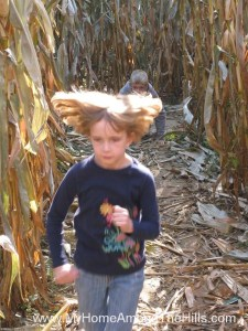 In the corn maze