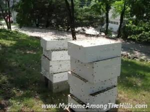 BeesGoneWild