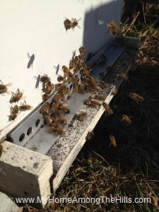 Bees flying near the beehive