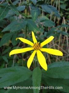 beautiful WV flowers