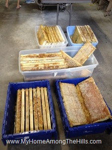 Some of the honey harvest, waiting to be extracted