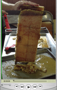 uncapping a frame of honey
