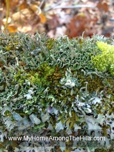 Moss and lichen!
