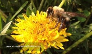 My bumblebee