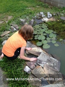 Looking for frogs in the pond