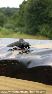 Stealth fighter or giant black horse fly?  You be the judge!