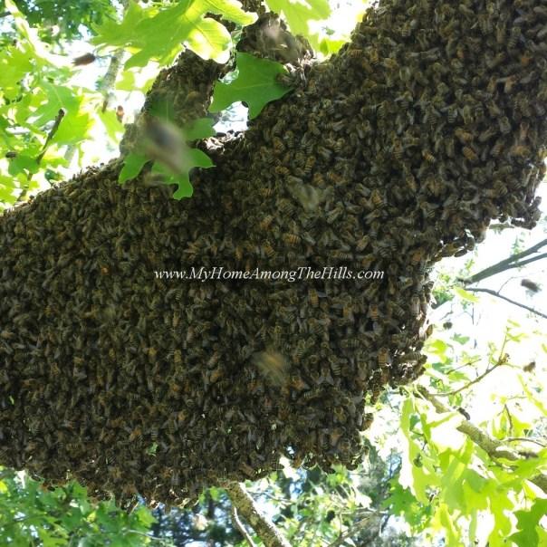 A huge swarm of bees!