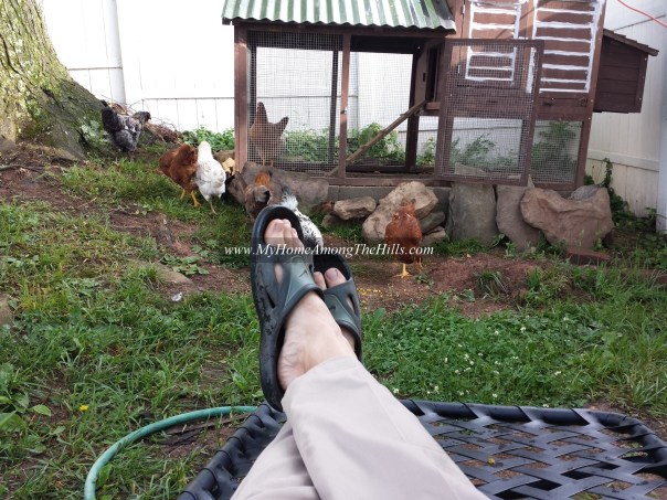 Lounging in the chicken yard!
