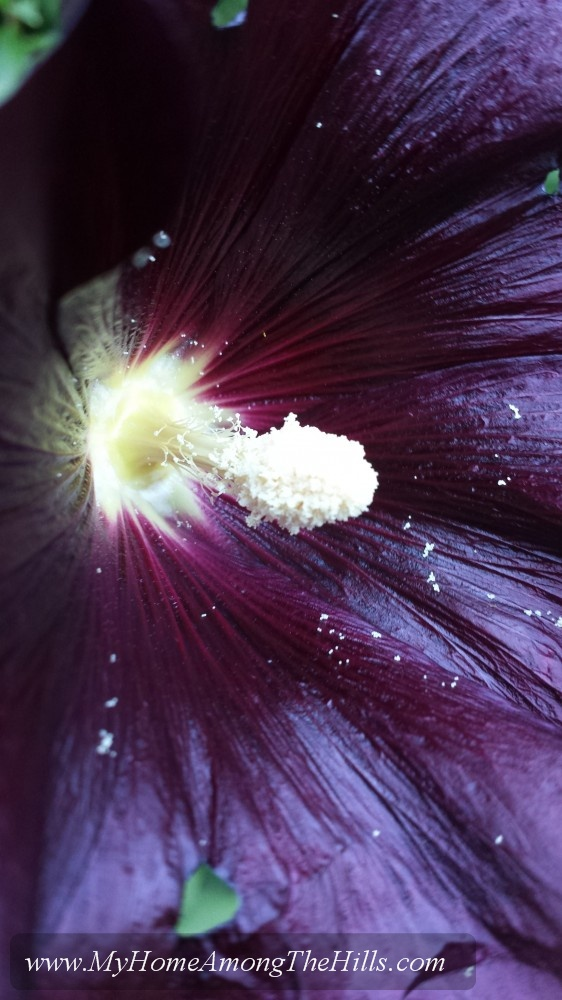 Pollen on the flowers