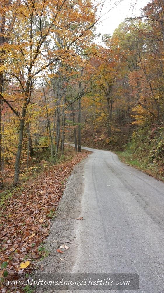 Fall leaves in WV