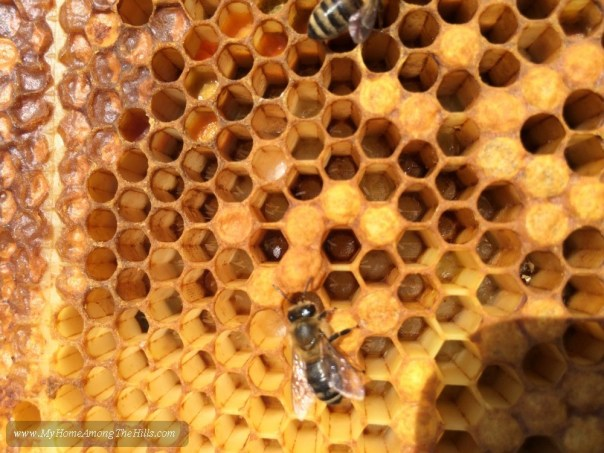 Multiple eggs in the honeycomb cells from laying workers