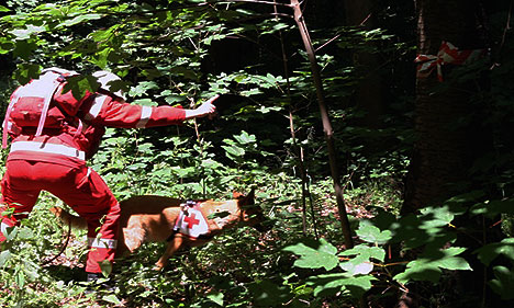 wpid-468DRK-Hunde-fit-fuer-den-Ernstfall-Murphy-2011-06-20-19-41.jpg
