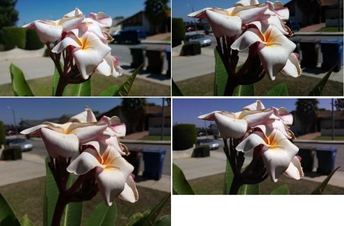 flower-lumia1020-520x293