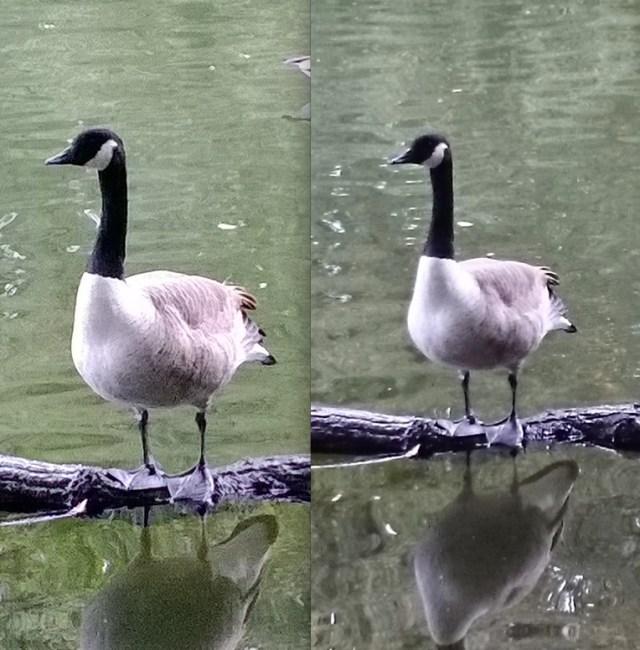 duck2comp