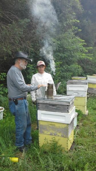NSL_151_smoking bees
