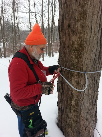 NSL_151_tree tapping