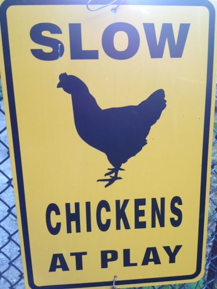 NSL_Southtown_Chicken