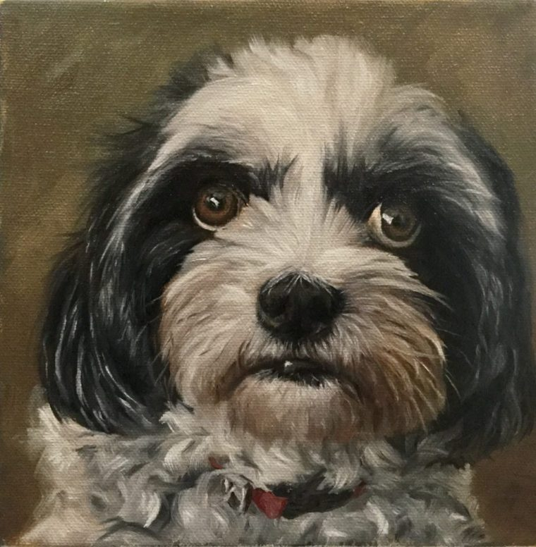 Painting Dog Portraits - Dog portrait of Rocco