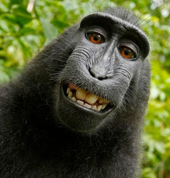 crested black monkey facebook self-portrait