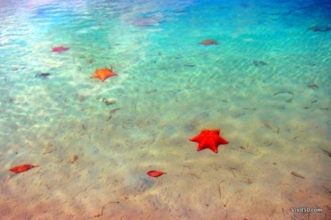 Starfish beach in Bocas del Toro Panama. Playa La Estrella. A must visit when island hopping in Bocas del Toro Panama